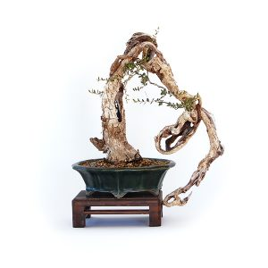 cat_bonsai
